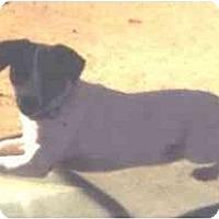 Adopt A Pet :: Kailee - Scottsdale, AZ