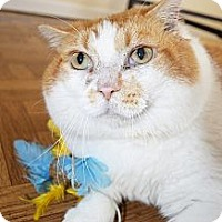 Adopt A Pet :: Cooper - Xenia, OH