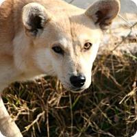 Adopt A Pet :: Tito - Erwin, TN