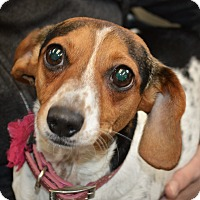 Adopt A Pet :: Flower - Middlebury, CT