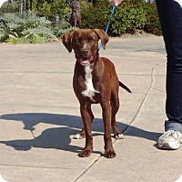Adopt A Pet :: Bruno - Lathrop, CA