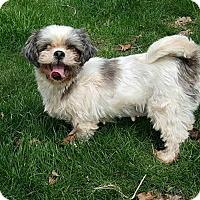Adopt A Pet :: ESTHER - ADOPTION PENDING - Smithfield, PA