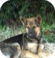 German Shepherd Dog Mix Dog for adoption in Manchester, Connecticut - ROCKY  ADOPTION PENDING