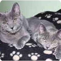 Adopt A Pet :: Jack & Bauer - Markham, ON