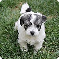Adopt A Pet :: Dorie - La Habra Heights, CA