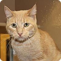 Adopt A Pet :: Charles - Santa Monica, CA