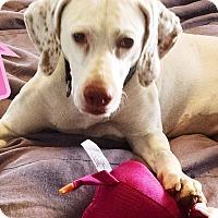 Adopt A Pet :: Jolly - Franklinton, NC