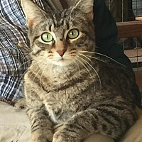 Adopt A Pet :: Sadie - Wagoner, OK