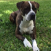 Adopt A Pet :: Harley - Key Largo, FL