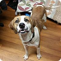 Adopt A Pet :: Rex Ford- SPONSORED - Lisbon, OH