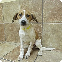 Adopt A Pet :: Rose *Petsmart GB* - Appleton, WI