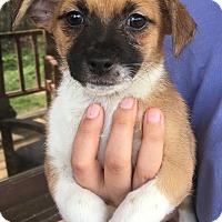 Adopt A Pet :: Monday - Harmony, Glocester, RI