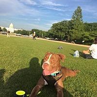 Adopt A Pet :: Judy-Maryland - Fulton, MO