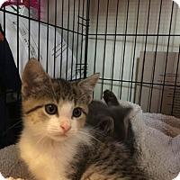 Adopt A Pet :: Mina - COMING SOON - Taylor, MI