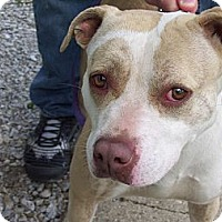 Adopt A Pet :: krista - Paris, IL