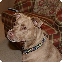 Adopt A Pet :: EVA - Higley, AZ