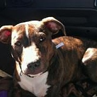 Adopt A Pet :: Jethro - Duluth, GA
