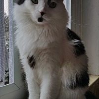 Adopt A Pet :: Noel - Philadelphia, PA