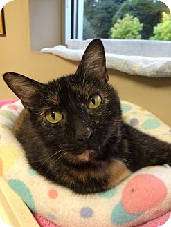 Domestic Shorthair Cat for adoption in Byron Center, Michigan - May