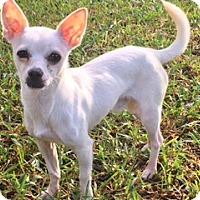 Adopt A Pet :: Tonto - Houston, TX