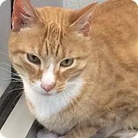 Adopt A Pet :: Taz - Bartlesville, OK