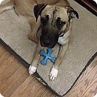 Adopt A Pet :: Dega ***COURTESY POST*** - Dillsburg, PA