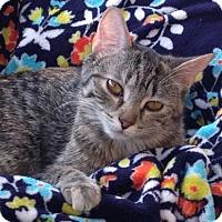 Adopt A Pet :: Hazel - St Paul, MN