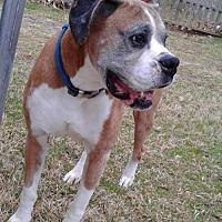 Adopt A Pet :: Makaio - Hurst, TX