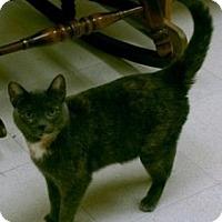 Adopt A Pet :: Olivia - Milwaukee, WI