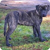 Adopt A Pet :: Shady - Athens, GA