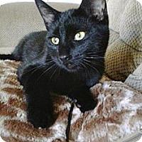 Adopt A Pet :: Nakita - Montreal, QC
