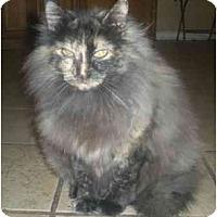 Adopt A Pet :: Chloe - Summerville, SC