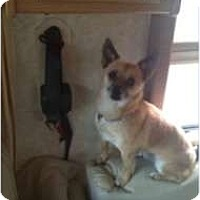 Adopt A Pet :: Harley - Courtesy - Vancouver, BC
