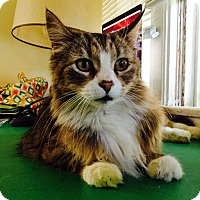 Adopt A Pet :: Paul - Los Angeles, CA
