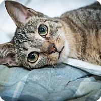Adopt A Pet :: Catsby - New York, NY