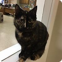 Adopt A Pet :: Paulette - Medina, OH