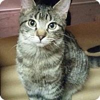 Adopt A Pet :: Parker - Valley Falls, KS