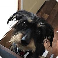 Adopt A Pet :: PERRO - Portland, OR