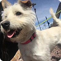 Adopt A Pet :: Happy - Las Vegas, NV