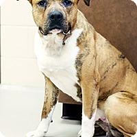 Adopt A Pet :: Moose - Appleton, WI
