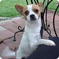 Adopt A Pet :: Otis - Duluth, GA