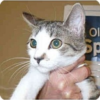 Adopt A Pet :: Gert - Colmar, PA