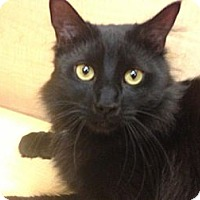 Adopt A Pet :: Sebastian - Monroe, GA