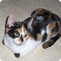 Adopt A Pet :: Cybil - Richmond, VA