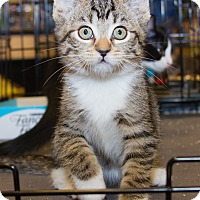 Adopt A Pet :: Tim - Irvine, CA