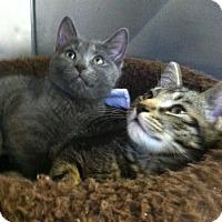 Adopt A Pet :: Twinkle - Trevose, PA
