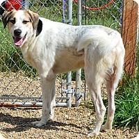 Adopt A Pet :: Denver - Prole, IA