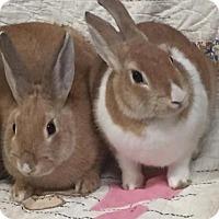 Adopt A Pet :: Clementine and Ambrosia - Williston, FL