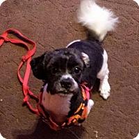 Adopt A Pet :: Brick NJ - Max - New Jersey, NJ