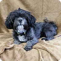 Adopt A Pet :: Thumper Turner - Urbana, OH